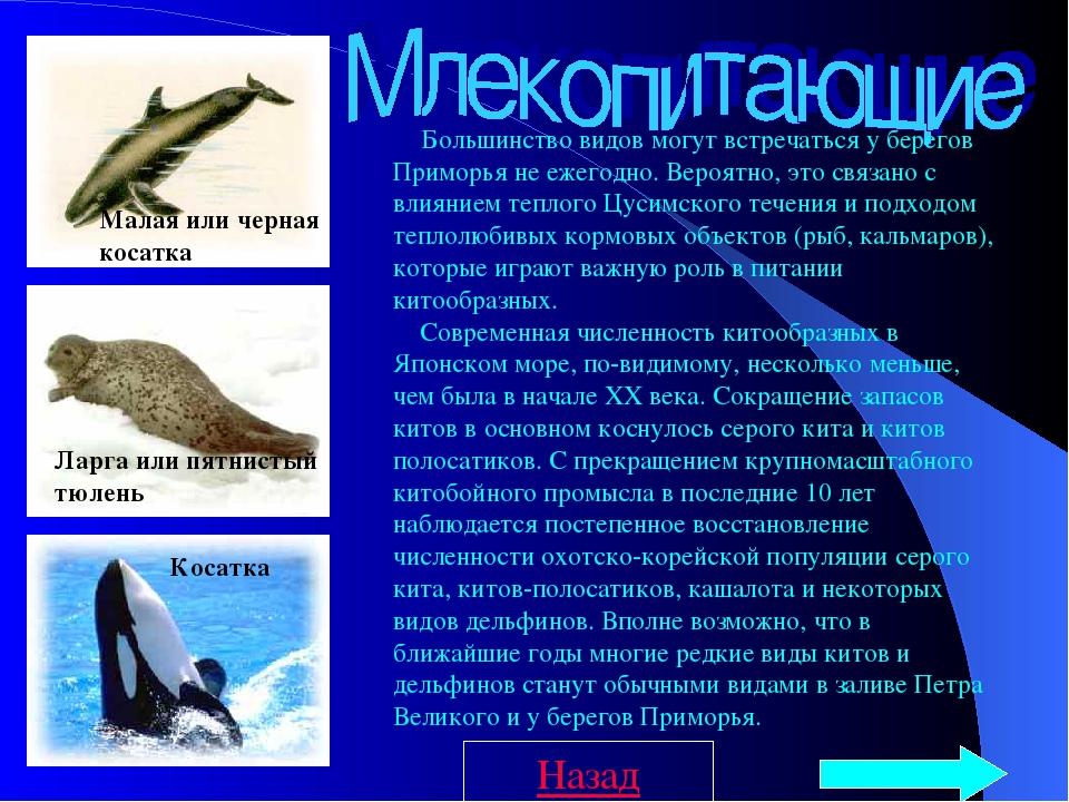 Большинство видов могут встречаться у берегов Приморья не ежегодно. Вероя...