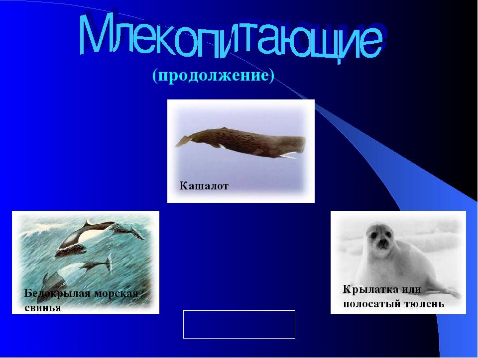 (продолжение) Крылатка или полосатый тюлень Белокрылая морская свинья Кашалот