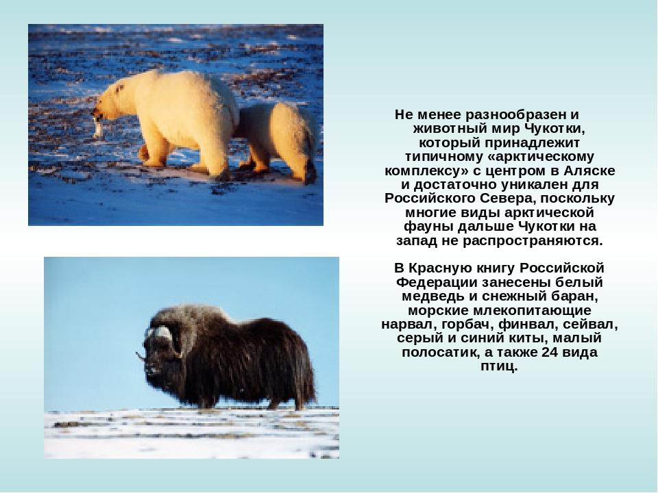 Не менее разнообразен и животный мир Чукотки, который принадлежит типичному...