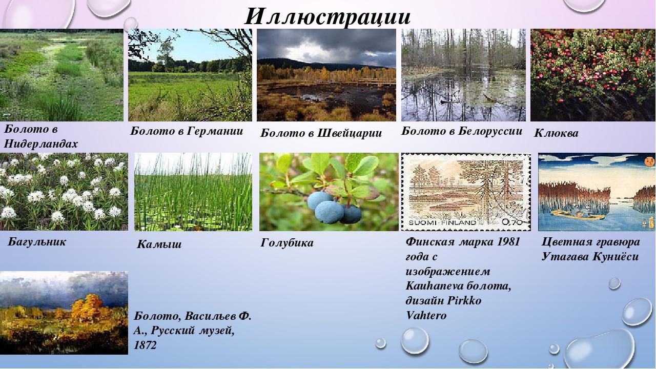 болота россии сообщение вскоре мир