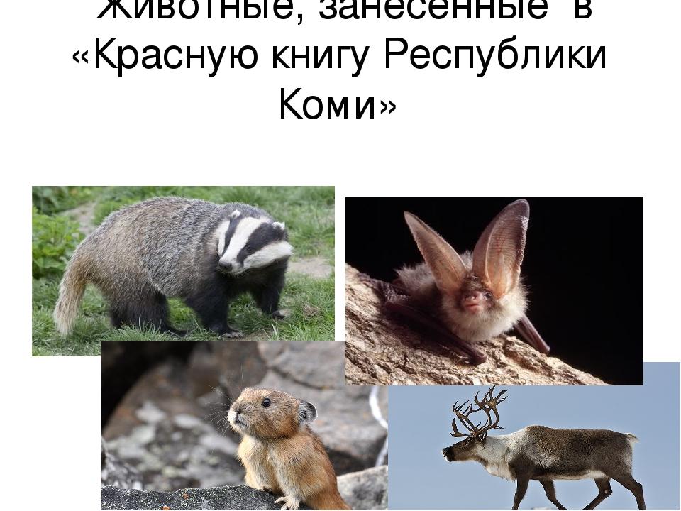 Животные красной книги в коми с картинками