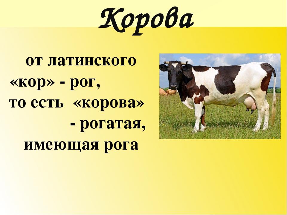 Словарное слово корова с картинкой