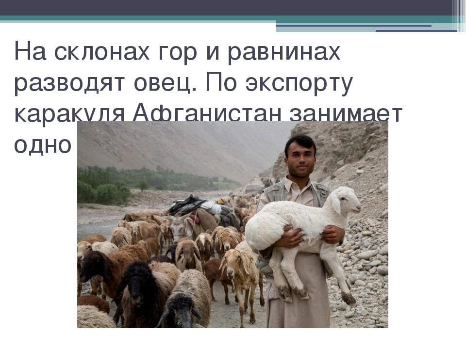 На склонах гор и равнинах разводят овец. По экспорту каракуля Афганистан зани...