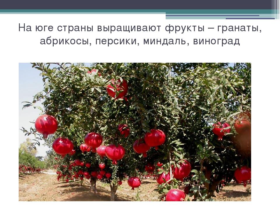 На юге страны выращивают фрукты – гранаты, абрикосы, персики, миндаль, виноград