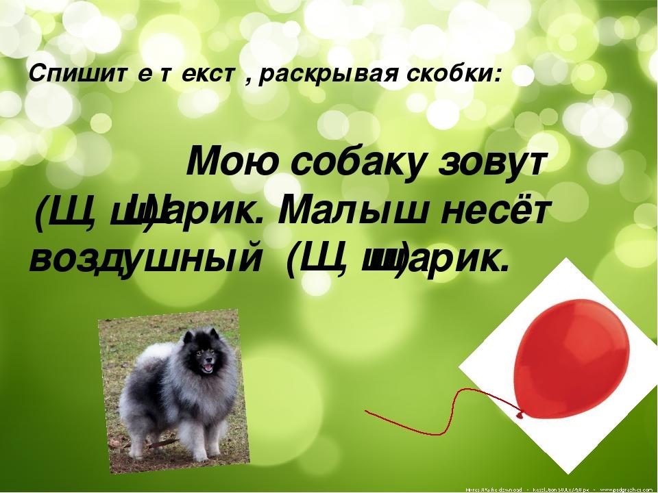 Спишите текст, раскрывая скобки: Мою собаку зовут арик. Малыш несёт воздушный...