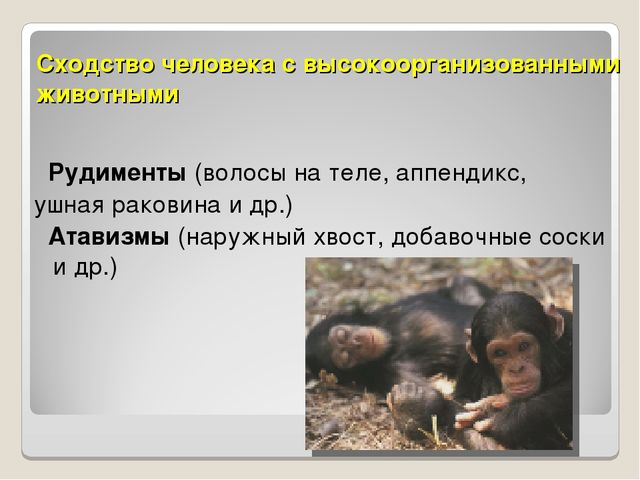 Биология 11 класс стадия эволюция человека негроиды