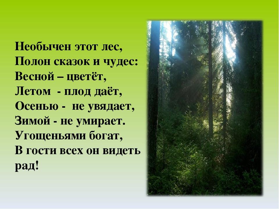 с жителями в стихах знакомства лесными