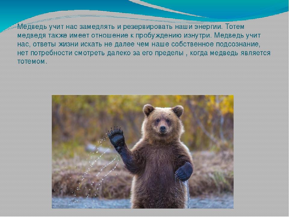 Медведь как символ картинки