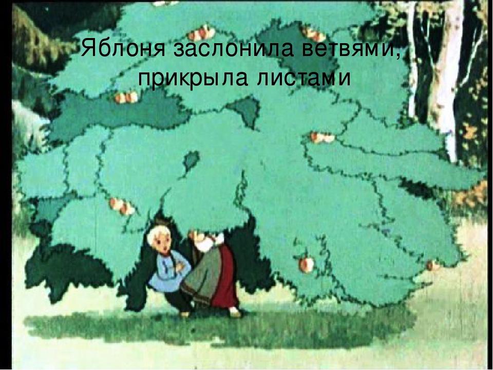 Яблоня заслонила ветвями, прикрыла листами