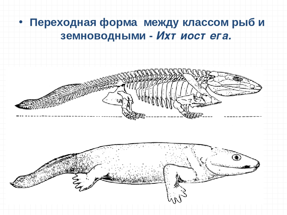 переходные формы животных картинки совершенно безопасна