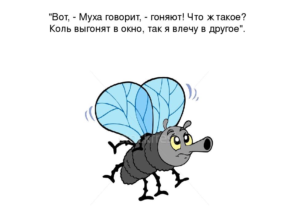 Божья, картинки с мухой и надписями