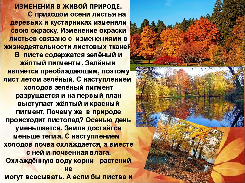 Доклад живая и неживая природа осенью 3320