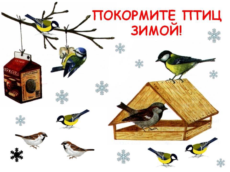 Картинки, покормите птиц зимой картинки