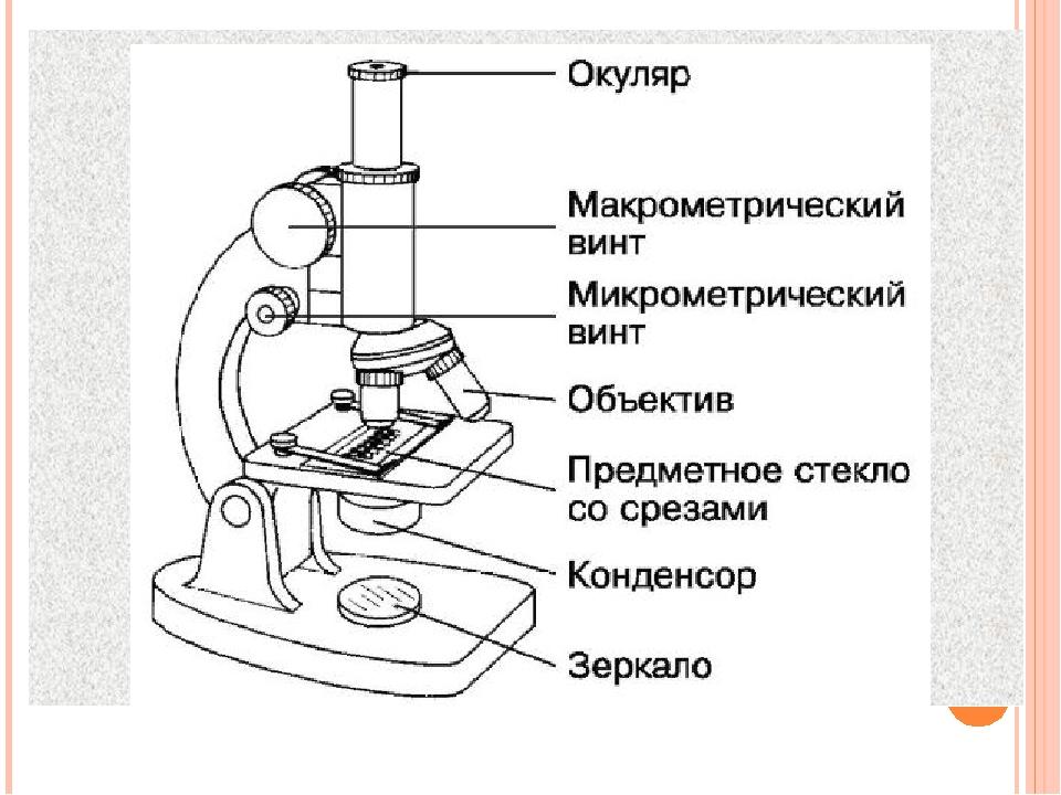 стиль интерьере микроскоп картинка с описанием девочки