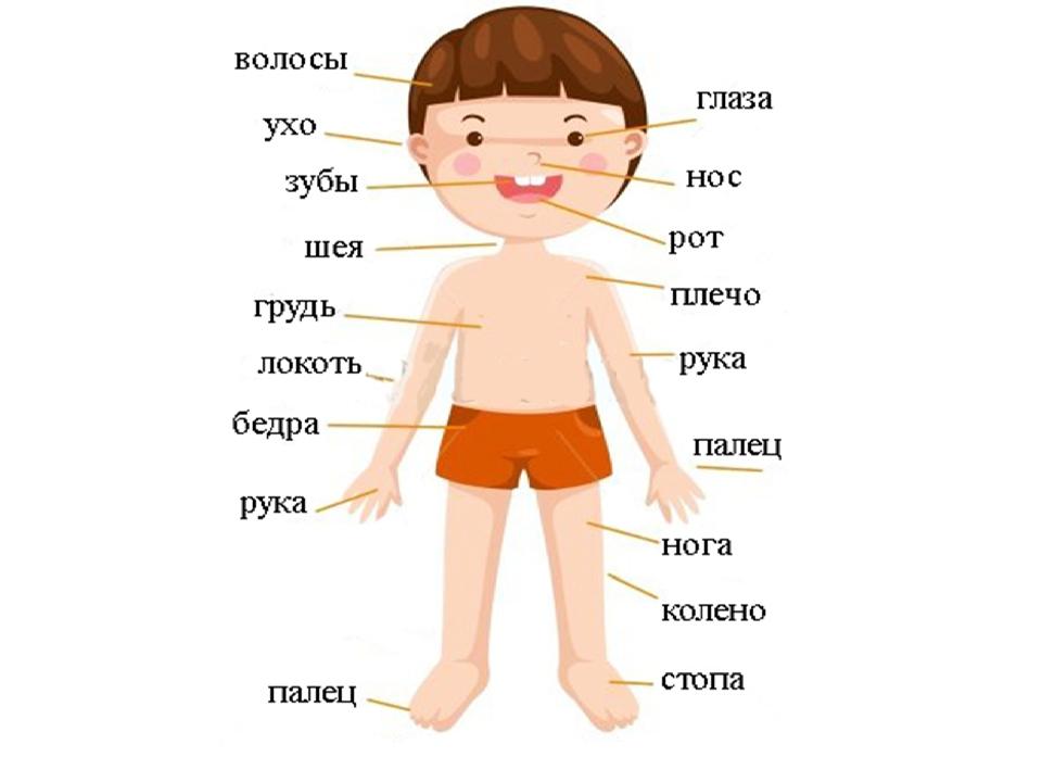 Для, картинка человека в полный рост для детей части тела
