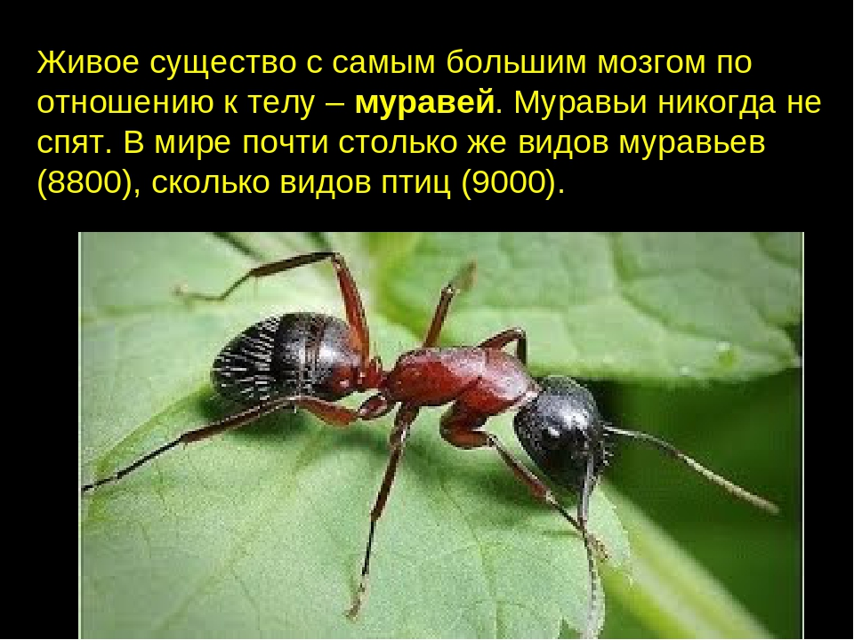 Картинки и интересные факты о муравьях