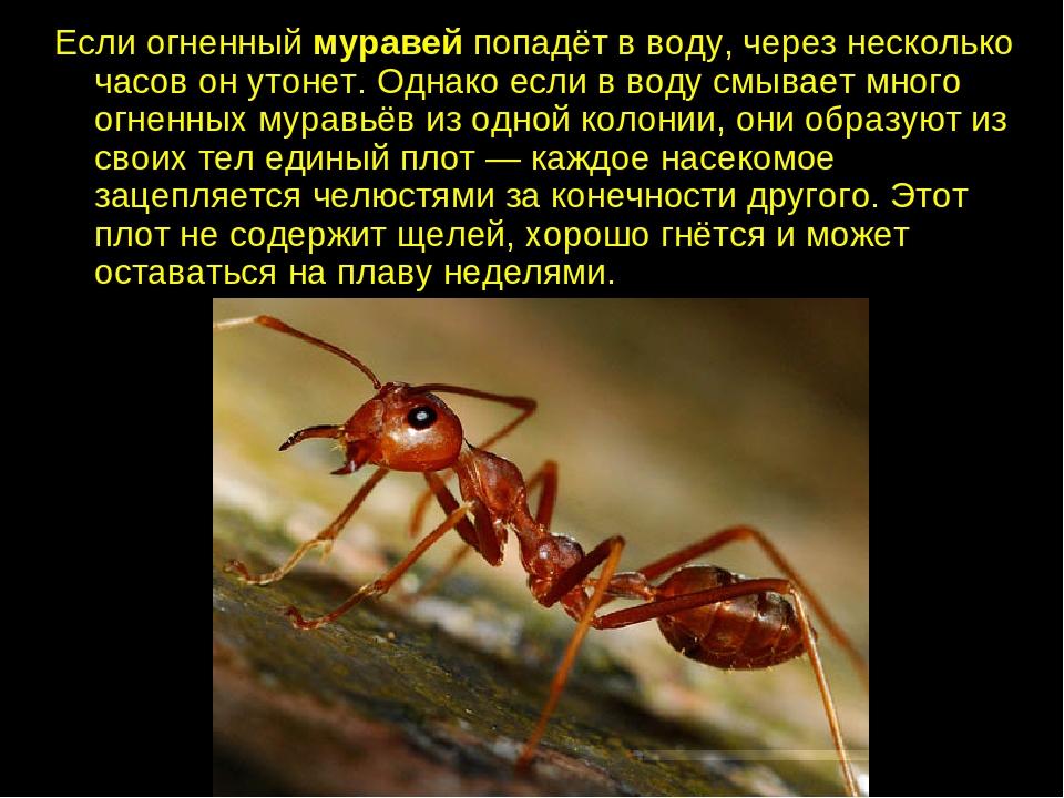 факты о муравьях в картинках пользователь приобрел жилье
