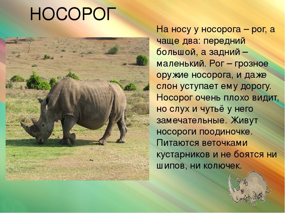 животный мир африки картинки для презентации
