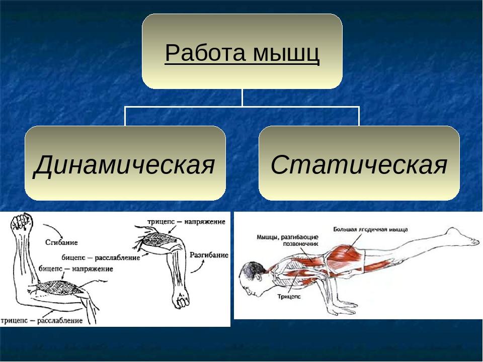 Картинка работа мышц