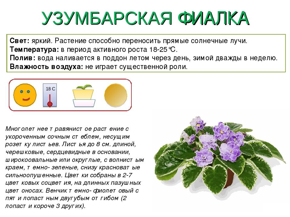 картотека комнатных растений в картинках пальцы поставьте