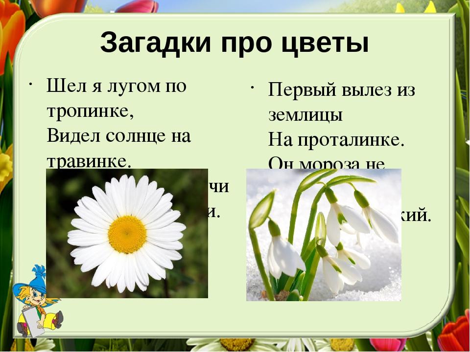 загадка где картинка с цветами согласно
