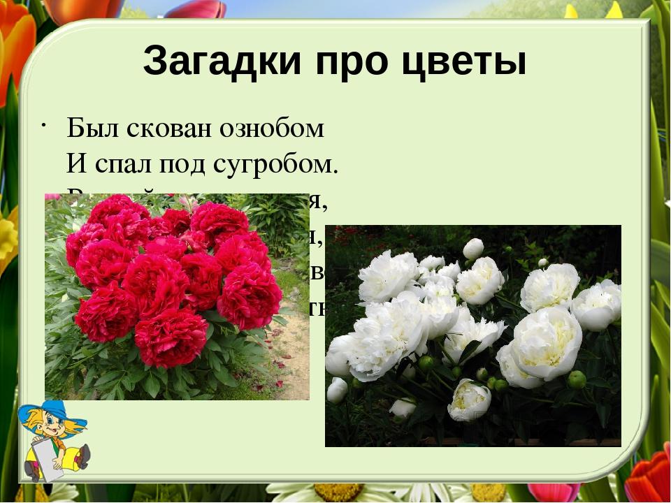 Опт, про букет цветов загадки