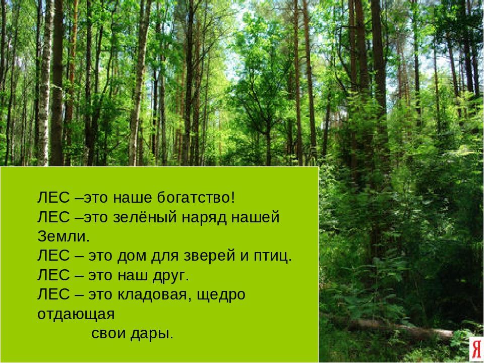 Конспект урока по окружающему миру 4 класс лес зелёное богатство