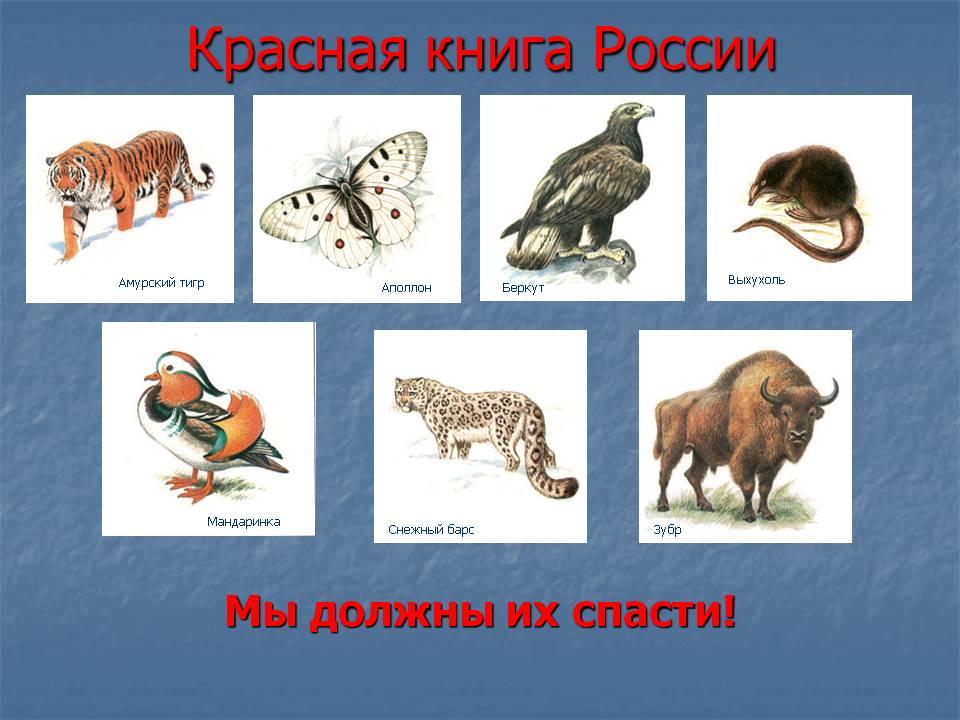 Картинки с животными из красной книги