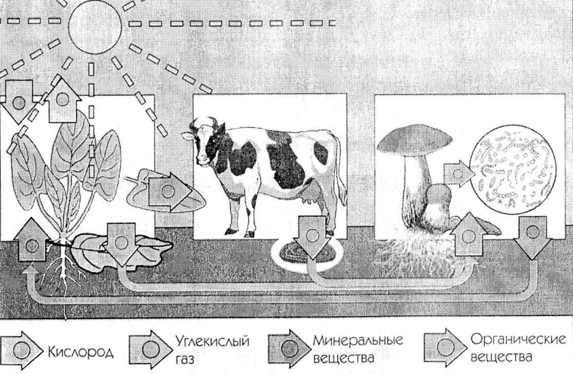 Итоговая контрольная по биологии класс учебник Пономаревой  hello html m5352abe3 jpg