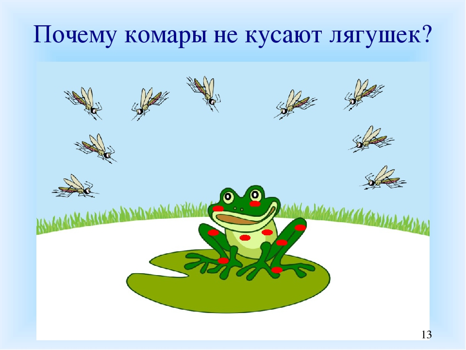 картинка про лягушек и комара как