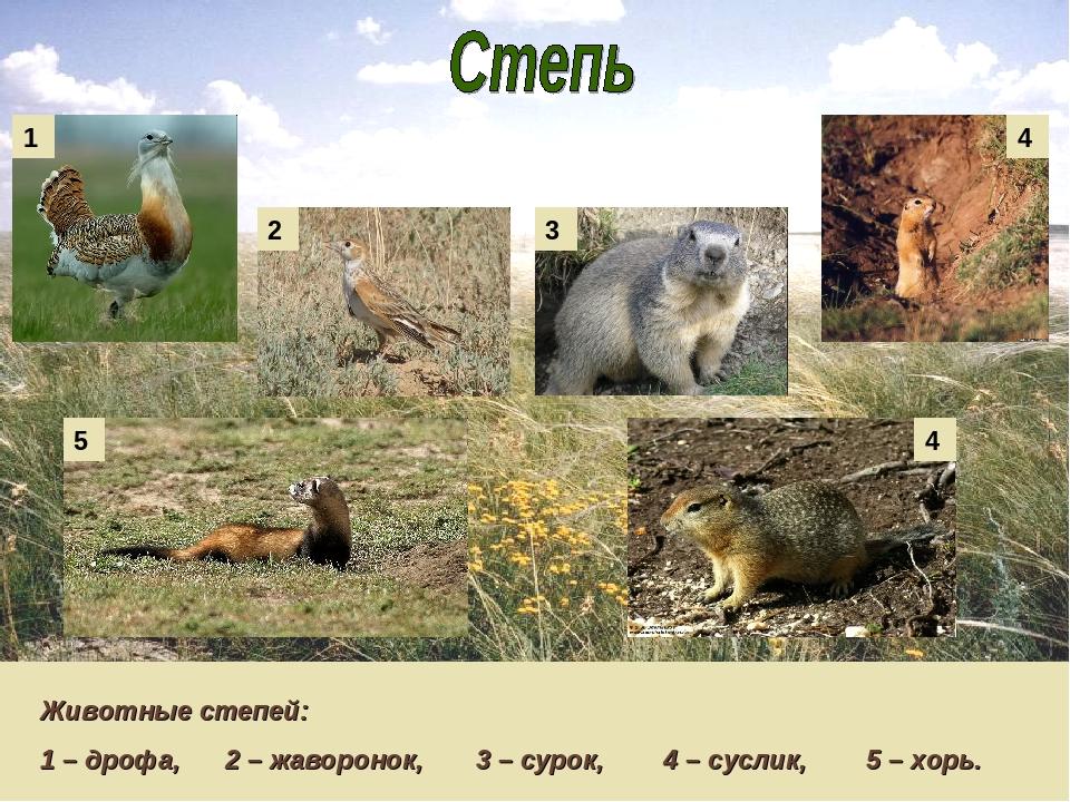 Приемные семьи животных фото