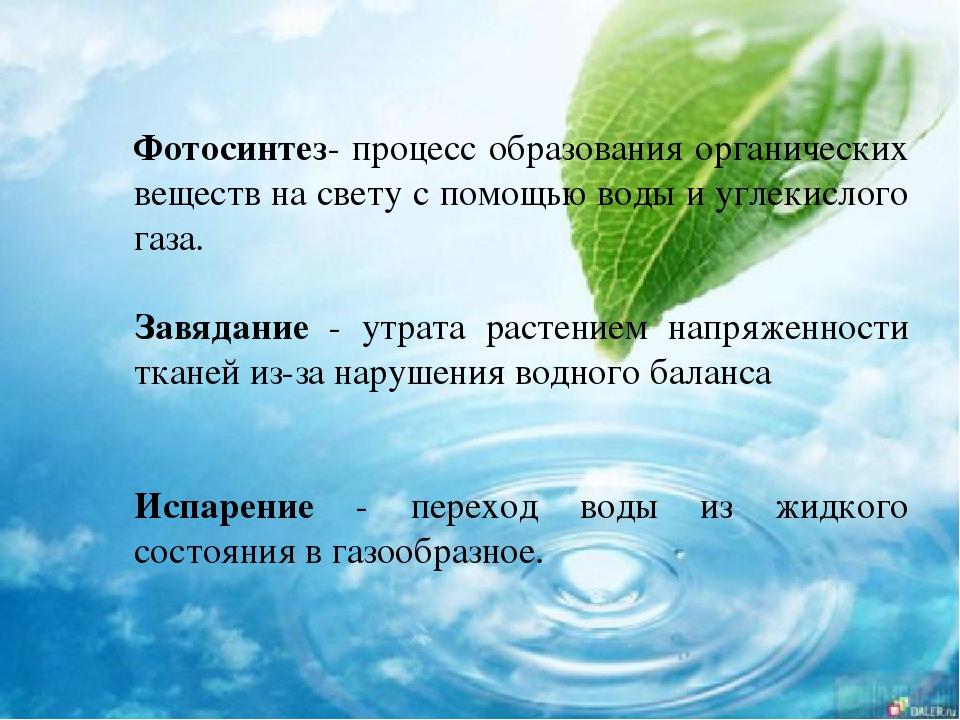 биологическое значение воды фотосинтезе давала