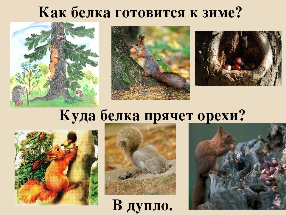 Картинки как животные к зиме готовятся