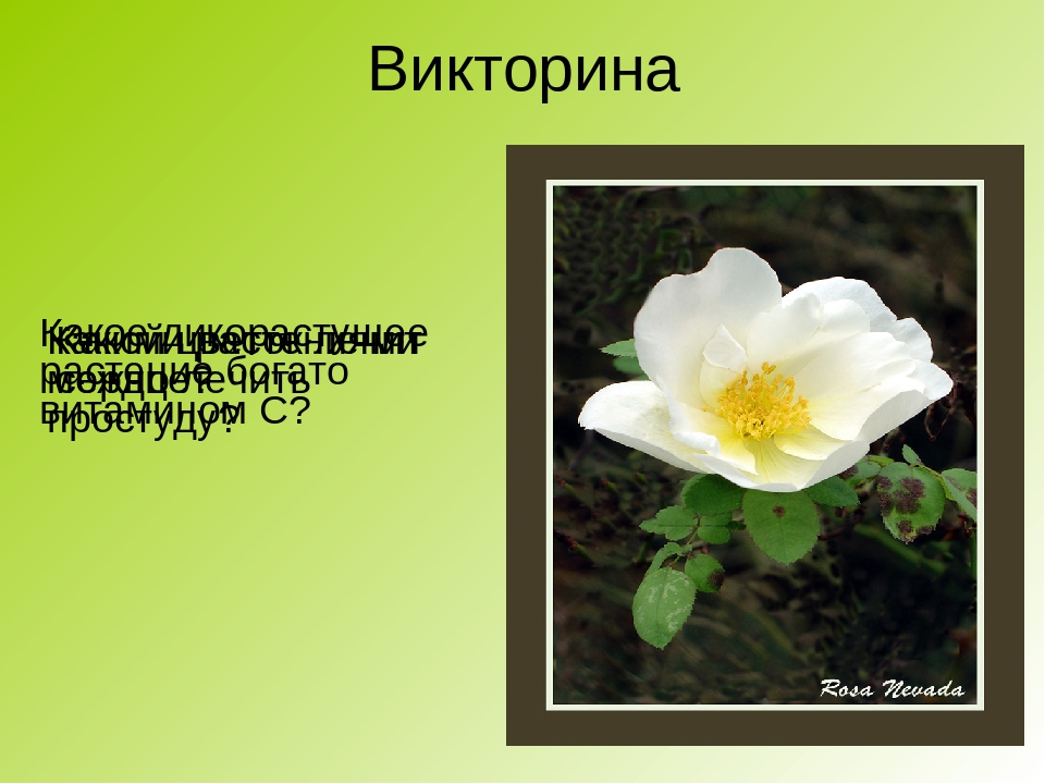 японском стиле растения ставропольский край фото описание спор отражает