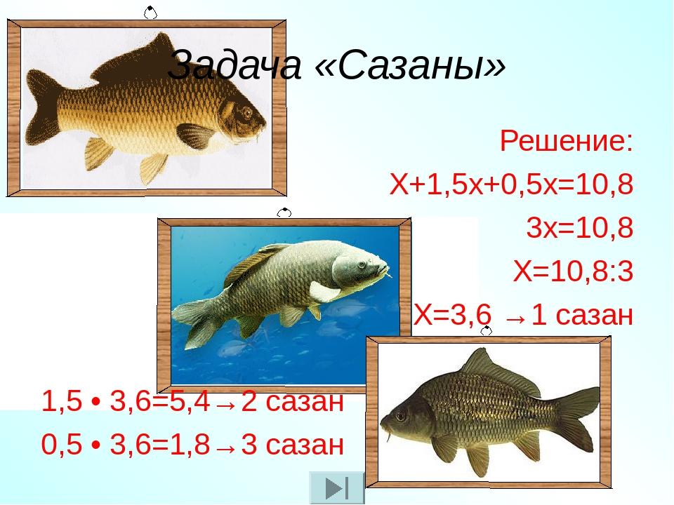 Задача «Сазаны» Решение: Х+1,5х+0,5х=10,8 3х=10,8 Х=10,8:3 Х=3,6 →1 сазан 1,5...