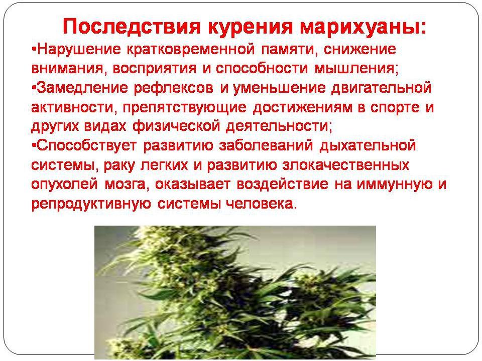 Влияние марихуаны негативное и вред марихуаны польза от