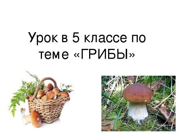Урок по биологии по фгос грибы 5 класс