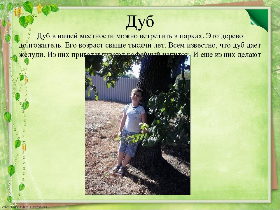 Дуб Дуб в нашей местности можно встретить в парках. Это дерево долгожитель. Е...