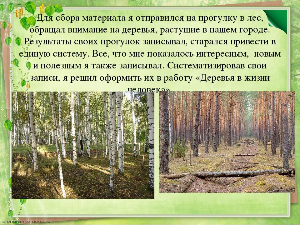 Для сбора материала я отправился на прогулку в лес, обращал внимание на дерев...