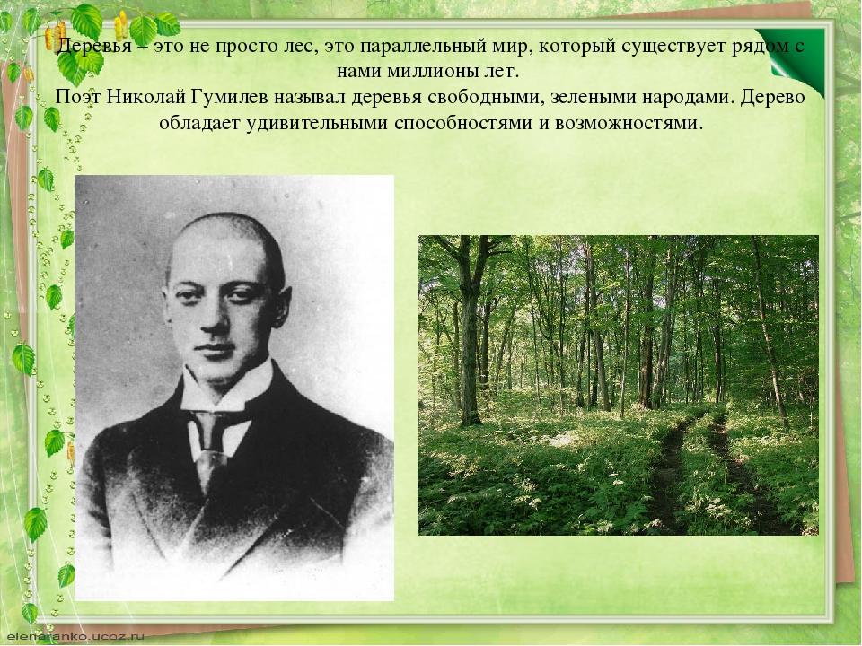 Деревья – это не просто лес, это параллельный мир, который существует рядом с...