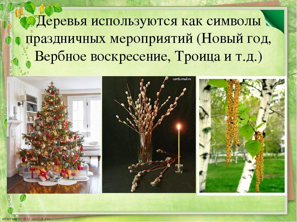 Деревья используются как символы праздничных мероприятий (Новый год, Вербное...