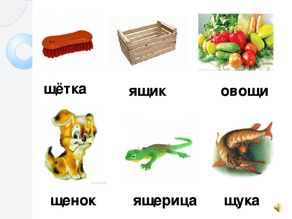Слова на щ в картинках для детей