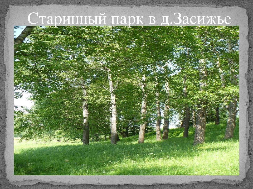 Старинный парк в д.Засижье