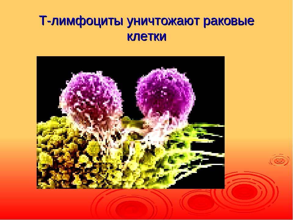 Т-лимфоциты уничтожают раковые клетки