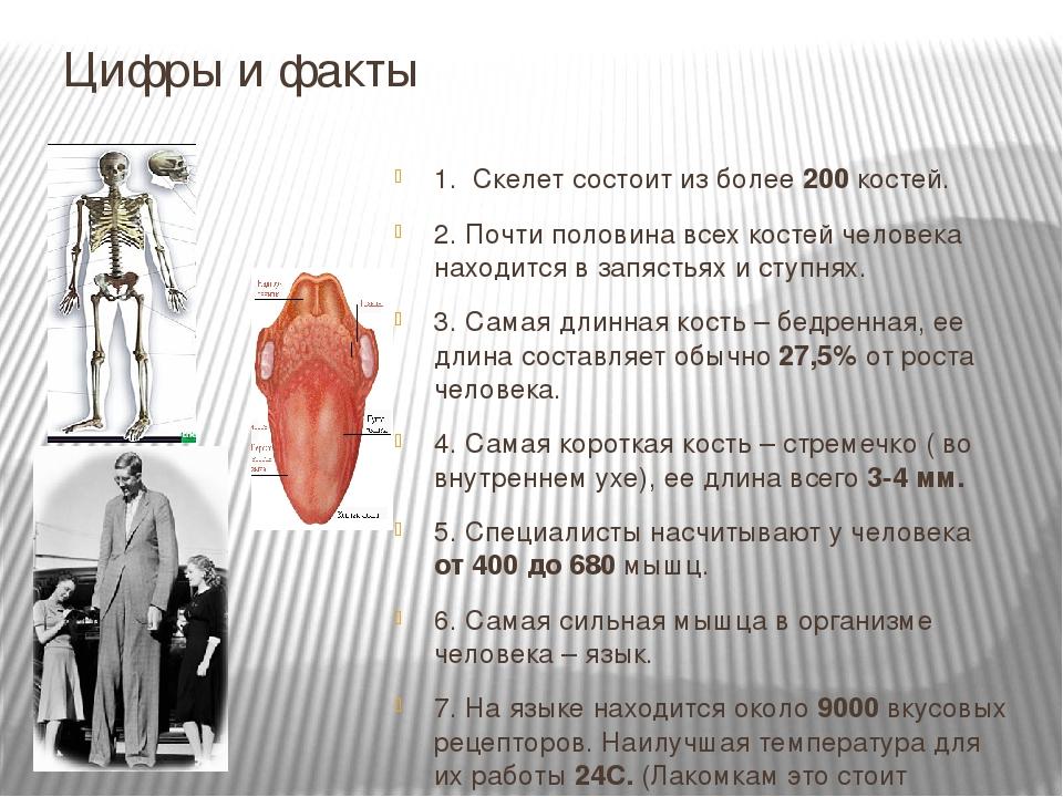 Цифры и факты 1. Скелет состоит из более 200 костей. 2. Почти половина всех к...