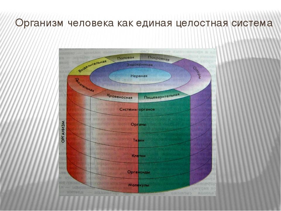 Организм человека как единая целостная система