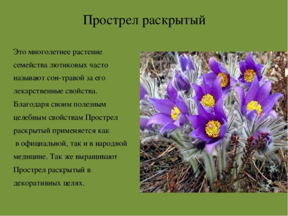 растения красной книги архангельской области фото одно