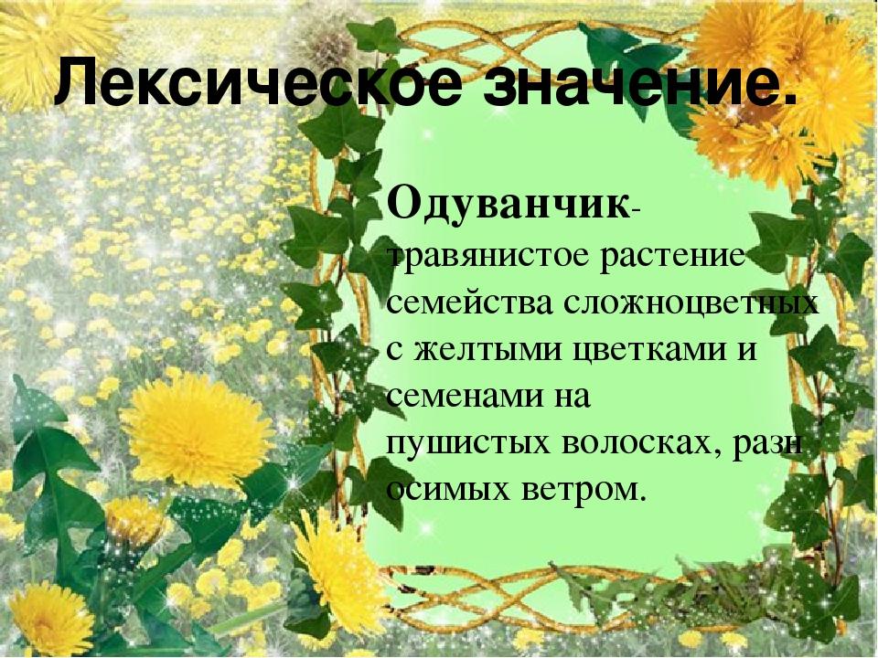 Одуванчик- травянистое растение семейства сложноцветных с желтыми цветками и...