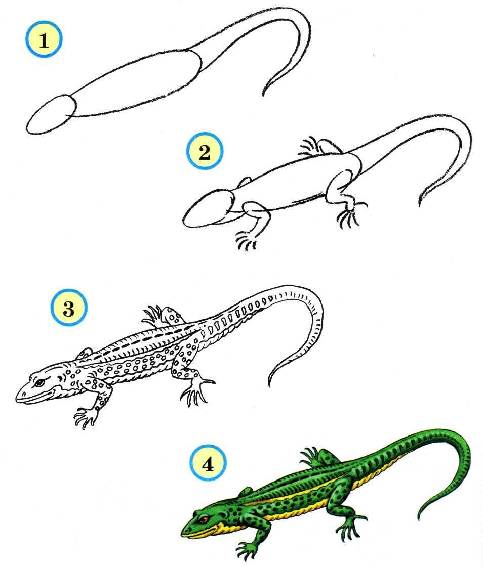 Нарисовать ящерицу поэтапно ребенку