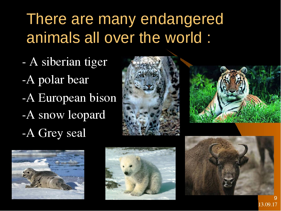white tigers are an endangered species and facing many challenges The endangered species act is the strongest conservation law in the world and our primary tool for protecting species and their habitat, stated ya-wei li, vice president of endangered species conservation at defenders.